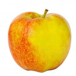 Anna Apple Clausen Nursery