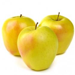 Dorsett Golden Apple Clausen Nursery