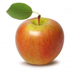 Gordon Apple Clausen Nursery