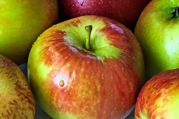 Pettingill Apple Clausen Nursery