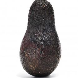 Sir Prize Avocado
