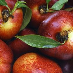 Panamint Nectarine Clausen Nursery