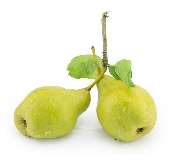 Hood Pear Clausen Nursery