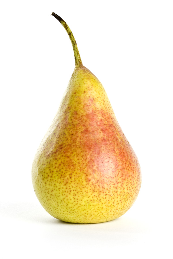 Sugar Pear Clausen Nursery