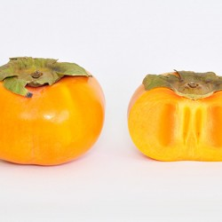 Fuyu Persimmon Clausen Nursery