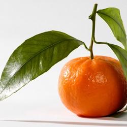 Honey Tangerine
