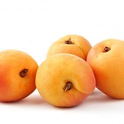 Goldkist Apricot Clausen Nursery