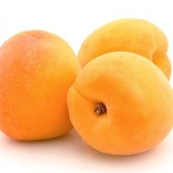 Katy Apricot Clausen Nursery