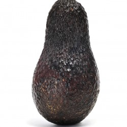 Sir Prize Avocado