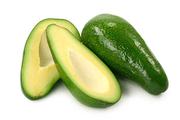 Fuerte Avocado Tree Clausen Nursery