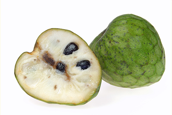 Pierce Cherimoya