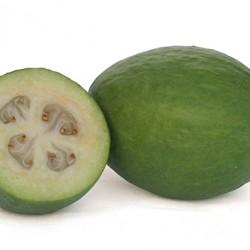 Pineapple Guava/Feijoa