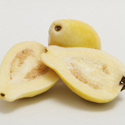 White Arabian Guava