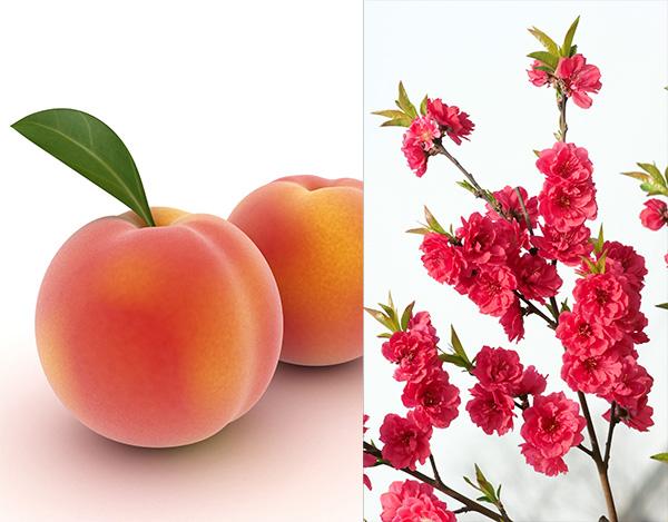 Red Baron Peach Clausen Nursery
