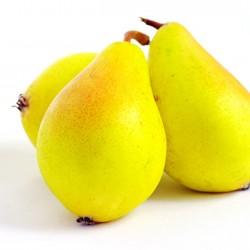 Fan-Stil Pear Clausen Nursery