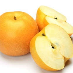 Hosui Asian Pear Clausen Nursery
