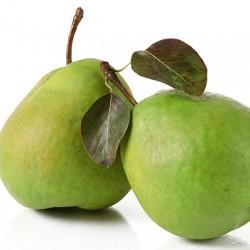 Orient Pear Clausen Nursery