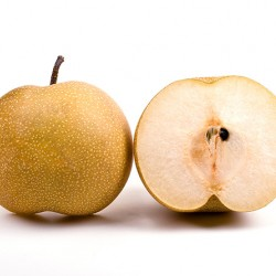 Shinko Asian Pear Clausen Nursery