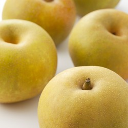 Shinseiki Asian Pear Clausen Nursery