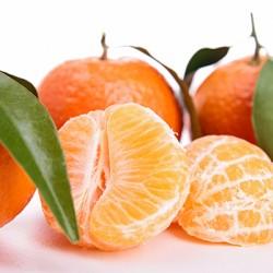 Clementine (Algerian) Mandarin