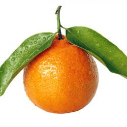 Kara Mandarin